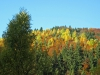 13-Herbst-Harzi 2012