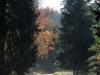 31-Herbst-Harzi 2012