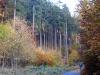59-Herbst-Harzi 2012